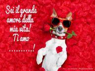 Crea cartoline personalizzate d'amore | Sei il grande amore della mia vita! Ti amo ...!